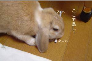 2006011703.jpg