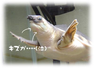 2006030703.jpg