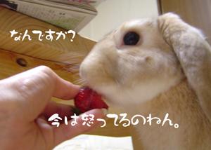 2006033001.jpg