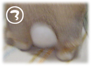 2006040503.jpg