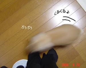 2006042208.jpg