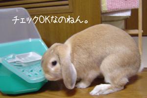 2006051504.jpg