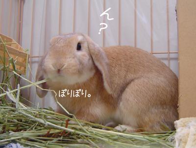 2006061901.jpg