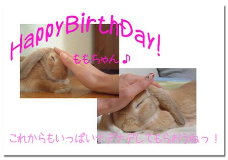 ももちゃん1歳のお誕生日おめでと!
