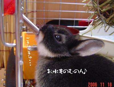 2006111903.jpg